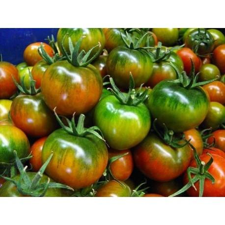 1 kg Pomodoro Camona