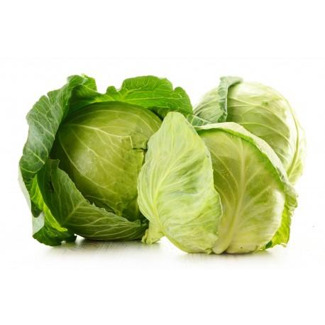 1 Cavolo Cappuccio Verde