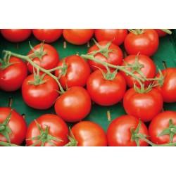 1 kg Pomodoro Grappolato