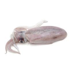 Calamari Freschi 1/2 Kg